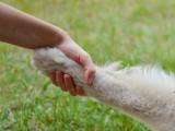 Un maître doit-il dominer son chien ?