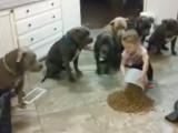 Vous pensez que les pitbulls sont dangereux ?