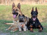 Rebelle, indépendant, soumis, tendre, peureux : les différents types de tempéraments du chien