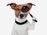 Chien perdu : que faire si mon chien a disparu ?