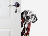 Faire vivre un chien en appartement