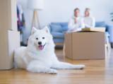 Déménager avec un chien: le déménagement dans la vie du chien