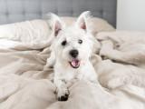 Un chien à la maison : 12 règles de vie