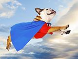 Comment faire pour avoir un super chien ?