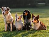 Caractère du chien : la race n'explique pas tout