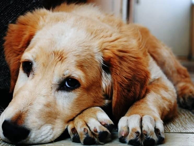 Les chiens peuvent-ils porter un jugement moral sur les