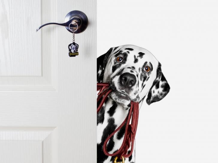 faire vivre un chien en appartement. Black Bedroom Furniture Sets. Home Design Ideas
