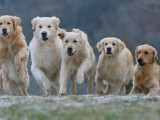 Éducation du chien : les conséquences du manque de hiérarchie