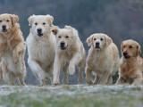 L'importance de la hiérarchie pour le chien