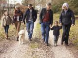 Comment déterminer la place du chien dans la famille