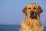 Le dressage d'un chien est indispensable