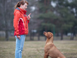 Comportement et obéissance du chien