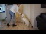 10 astuces pour dresser et éduquer son chien