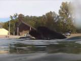 Des Terre-Neuve nage sur et sous l'eau