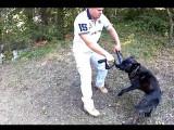 Comment éviter que votre chien morde sa laisse