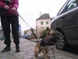 Promener son chien en toute tranquillité