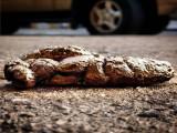 A Béthune, les crottes de chien se transforment en or