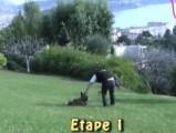 Apprendre à son chien à rester couché et sage