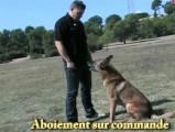 Gérer les aboiements de son chien
