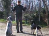 Démonstration d'éducation canine