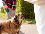 Le comportement du chien en présence d'invités