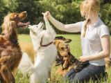 Que faut-il travailler en priorité avec son chien pour bien le dresser ?
