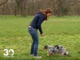 Quelques tours à apprendre à votre chien