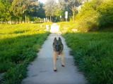 3 routines journalières à adopter pour éduquer votre chien