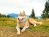 L'éducation d'un chien à l'âge adulte
