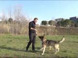 Intéragir avec son chien à l'aide de jouets