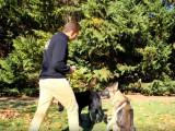 Comment sanctionner votre chien ?