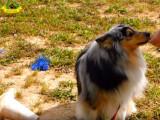 Être écouté par son chien sans friandise