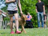 Les races de chiens les plus faciles à éduquer et dresser