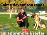 Règles de base pour bien édquer son chien