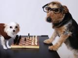 Rendre son chien plus intelligent: comment stimuler mentalement son chien