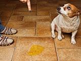 Les différentes façons de punir son chien