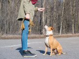 Assis, debout, couché : apprendre les positions de base à son chien