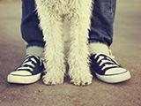 Un chien a-t-il besoin de hiérarchie pour s'épanouir ?
