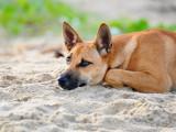 Pourquoi il ne faut pas laisser son chien errer seul ?