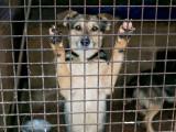 Le confinement : 5 étapes pour que votre chien tolère la solitude