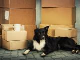 L'adaptation du chien face aux changements
