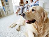 Adopter un chien adulte : s'adapter à son nouvel environnement