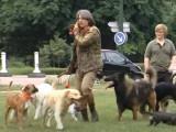 Vidéo Un chien Berger Allemand dressé à retrousser sa