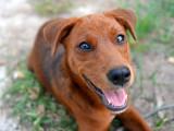 Le chien et son maître : Apprendre à vivre ensemble