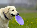Apprendre à son chien le rapport d'objet