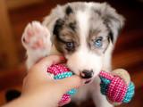Comment reprendre un objet à son chien ?