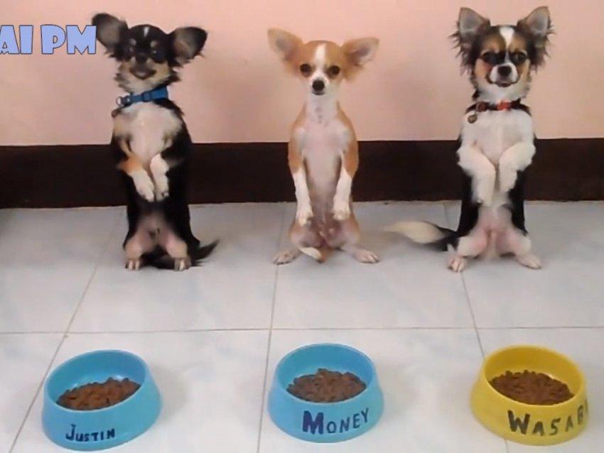 Vidéo Compilation des chiens les mieux dressés