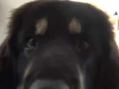 youtube video dresser son chien