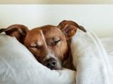 Lieu de couchage du chien : où faire dormir son chien ?