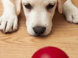 À quel âge peut-on éduquer un chien ?